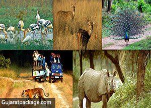 Flora and Fauna at Gir National Park