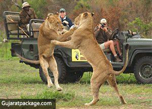 Gir-National-Park-and-Wildlife-Sanctuary-