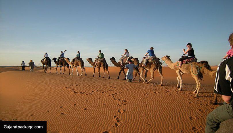 Kutch-Desert-Wildlife-Sanctuary