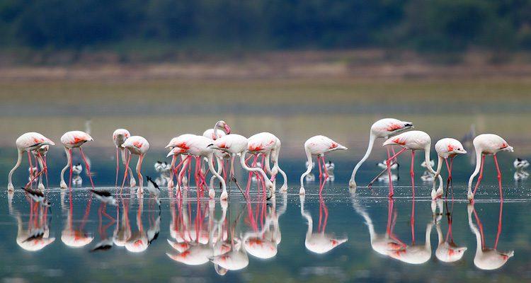 nal-sarovar-bird-sanctuary-Ahmedabad-tourism-opening-time-closing