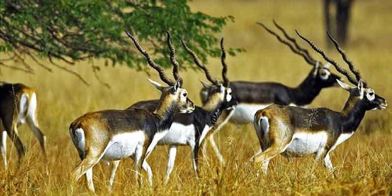 gujarat-wild-life-and-beach-tour